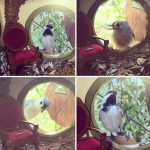 tiny-bird-friends-homes-jada-fitch-10