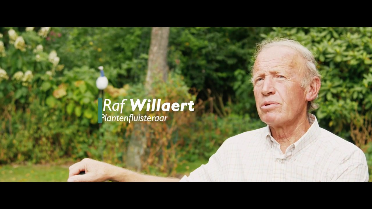rafwillaert