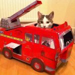 top-10-images-of-cats-in-toy-vehicles-L-l2xuTZ